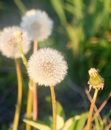 May 15 2008 017 blog