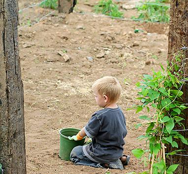 Garden 012 blog