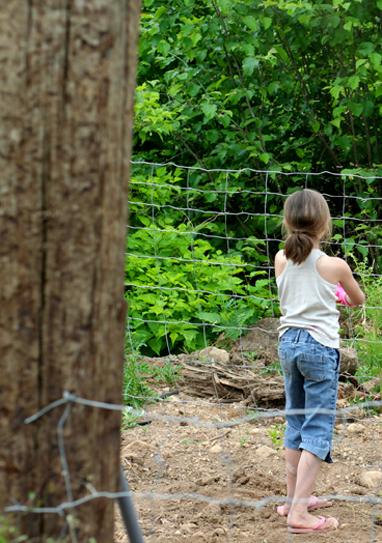Garden 013 blog