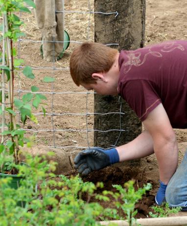 Garden 019 blog