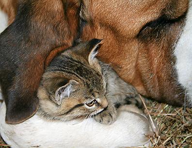 Simon_and_kittens_005_blog