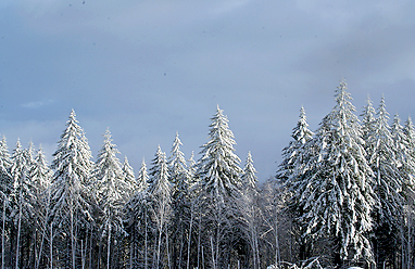 Snow_dec_30_011_blog